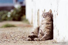 冬休みはほっこりネコ鑑賞。動物写真家・岩合光昭さんによるネコの写真展スケジュールをまとめました。