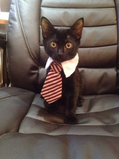 My very own business cat, leave him alone he is very busy right meow. - Imgurhttp://imgur.com/gallery/F9LuhFN