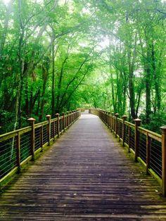 The beautiful, lush greenery of Hilton Head Island, South Carolina. Sea Pines Forest Preserve