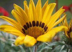 One of my favorites! Flower photography by Kristen juran