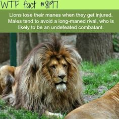 WTF Fun Facts is updated daily with interesting & funny random facts. We post about health, celebs/people, places, animals, history information and much more. New facts all day - every day! Wtf Fun Facts, Funny Facts, Random Facts, Strange Facts, Random Animal Facts, Crazy Facts, True Facts, Humor Mexicano, Beautiful Creatures
