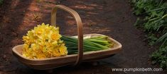 For my 2015 trialled and tested list of gifts for gardeners, I recommended a hand-made Trug Makers Trug – Trug – a large, deep versatile trug, ideal for harvesting large vegetables and fruit. I am still using my Trug this versatile trug is… Cut Flowers, Yellow Flowers, Stuff To Do, Things To Do, Gardening Tools, Sustainable Living, Daffodils, Harvest, Pumpkin