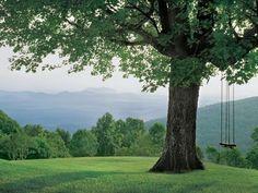 perfect tree swing.