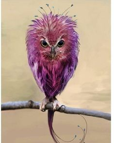 Don't call me an owl! I'm an Easter egg born in an owl body. Exotic Birds, Colorful Birds, Green Birds, Purple Bird, Exotic Animals, Tropical Birds, Purple Rain, Beautiful Owl, Animals Beautiful