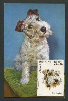 ROMANIA MK 1971 HUNDE FOXTERRIER HUND DOG MAXIMUMKARTE MAXIMUM CARD MC CM d5905