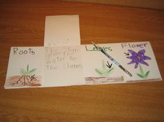 Parts of a Plant Foldable-can make for complete/incomplete metamorphosis