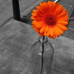 I love gerber daisies and photos like this: the black and white with a dab of color...