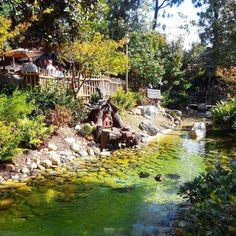 Can I live here..please  #disneyland #hideaway #ilovedisneyland #riverview #ducks #tinyhouse #lovely #outdoors #letsdisney #disneymagic by creative_cap