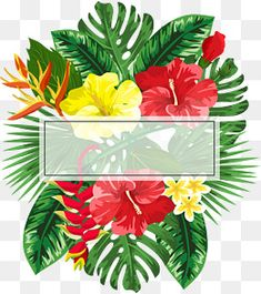 Beautiful flower decorative frame PNG and Vector Tropical Frames, Tropical Flowers, Summer Flowers, Red Flowers, Beautiful Flowers, Watercolor Print, Watercolor Illustration, Watercolor Flowers, Photo Png