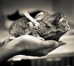 Ring Bearer: This came from The Animal Rescue League of Boston. Notice what is tied to the sweet little baby.