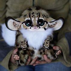 「Inari Fox | Photo by unknown」