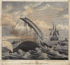 Engraving of a whale tossing a whaling boat up into the air