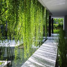 landarch.co Naman Spa   Danang, Vietnam ----- By MIA Design Studio - 3/3 ----- White latticed screens and trailing planting shade the glazed facade of this Vietnam day spa from the midday sun, as well create a tranquil environment for the pools in the internal courtyard. The network of vertical and horizontal bars that cover parts of the facade are reflected in a palm-flanked pool in the grounds, helping to soften the distinction between building and landscape. #courtyard #verticalplanting…