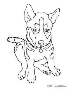 Beautiful Husky Coloring Page Nice Dog Drawing For Kids More Animals Pages On