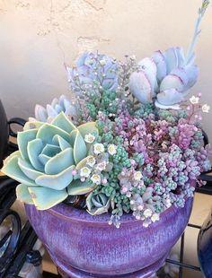 Cutest little blooms🔮 Photo by Succulent Gardening, Garden Terrarium, Planting Succulents, Container Gardening, Planting Flowers, Succulent Plants, Succulent Terrarium, Indoor Gardening, Hardy Plants