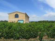 The winery 'Vinyes del Terrer', seven acres located just 20 meters above the sea level (DO Tarragona).