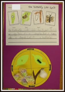 Today In First Grade: The Butterfly Life Cycle with writing piece