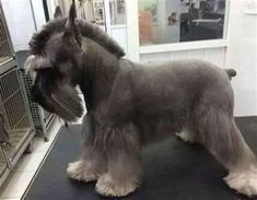 professional dog grooming supplies (paid link) For more information, visit image link. #DogGrooming #DogGroomingSupplies Dog Grooming Styles, Dog Grooming Salons, Dog Grooming Tips, Dog Grooming Business, Schnauzer Cut, Schnauzer Grooming, Miniature Schnauzer Puppies, Schnauzers, Giant Schnauzer