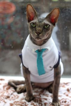 Cat shirt and tie/ Sphynx shirt by ekeka on Etsy, $18.00  My boy would be so cute in this!!