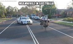 28 Funny Crazy Meme Pictures Meanwhile In Australia Bizarre Pictures, Meme Pictures, Funny Photos, Drive In, Australia Meme, Funny Memes, Jokes, Hilarious, Funny Shit