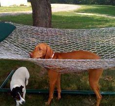 ハンモックにハマって動けなくなった犬