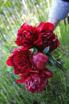 Red charm peonies to be used in the large ceremony florals.
