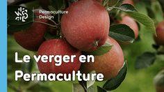 Mener son verger en permaculture, c'est produire des fruits sains plein des saveurs de votre terroir tout en favorisant la vie sous toutes ses formes !