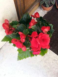 Buenos dias, estas flores son para ti!