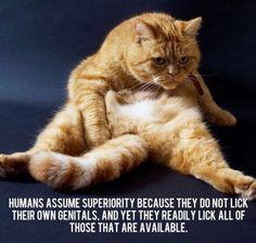 Ah cats...