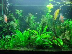 How to choose compatible fish for your freshwater community aquarium