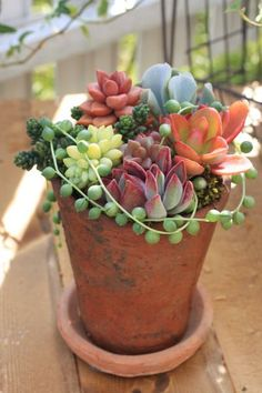 Simply beautiful.== This year I love succulents even more than past years. I will DIY in a large clear glass vessel a succulent arrangement much like this one.~Dee ALSO QUESTION??? Do Succulents grow ok indoors or are they outside plants mainly??? Th