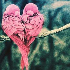 ~Pinkを制する者は婚活を制す~  どの様な色でも、色彩心理学的に良い面と悪い面の影響を与えるものがありますが、、 Pinkにはマイナスの面が少ないという 特徴があるそうデス❤︎❤︎❤︎   http://s.ameblo.jp/bienfukuoka/entry-12052647879.html  #sns #cute #love #アメブロ  #ブログ #婚活 #ピンク  #メイク  #女子力 #恋人 #心理学   #健康  #美容  #ホルモン #セミナー  #撮影  #モデル  #タレント   #オーディション #YOLO  #instagood   http://s.ameblo.jp/bienfukuoka/entry-12052647879.html