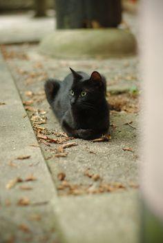 Black cat by yuuukiii