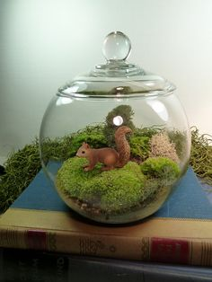 "This is a great moss terrarium which measures 5-1/2"" wide and is 7"" high including the lid. Give it as a gift and let the fresh green moss brighten any gloomy room or office. This terrarium includes mood moss, pillow moss, and a cute squirrel. Moss requires shade and indirect light so it is the perfect indoor plant. Water the terrarium by misting every two to three weeks and its self-containing ecosystem will do the rest. The terrarium requires low maintenance so it is perfect for someon..."