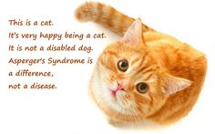 Love this quote! I made this for Levi, since the kitty looks like our Punkin'.  This is a cat.  It's very happy being a cat.  It is not a disabled dog.  Asperger's Syndrome is a difference, not a disease.   I truly believe Aspie's are the next evolution of human-kind, and if I could change anything in the world about my son, I wouldn't change a thing!