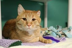 Tiberius has been adopted from Seattle Humane! :-) http://www.seattlehumane.org/adoption/cats