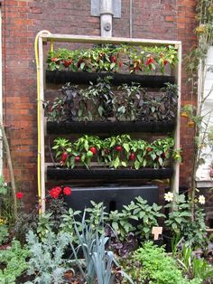 DIY Vertical Gardening For The Back Shed Wall.