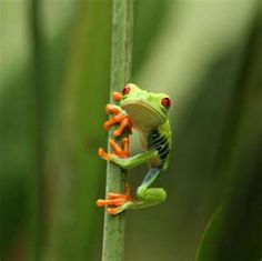Tree frog. this would be cute as a tattoo with just the frog