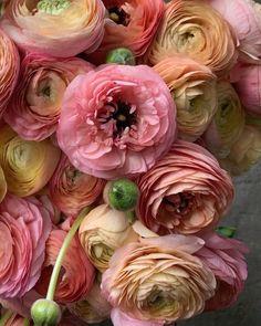 My Flower, Flower Power, Good Morning Flowers Rose, Persian Buttercup, How To Kill Bees, Beautiful Flowers Garden, No Rain, Blooming Flowers, Ikebana
