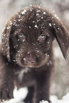 All the super cute, almost cute, and not quite cute animals (and animal type things) Cute Puppies, Cute Dogs, Dogs And Puppies, Doggies, Animals And Pets, Baby Animals, Cute Animals, Fluffy Animals, Tier Fotos
