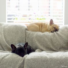 """Click visit site and Check out Cool Frenchie Shirts. This website is top-notch. Tip: You can search """"your last name"""" or """"your favorite shirts"""" at search bar on the top. #Abyssinian #Cat"""