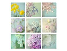9 Abstract Flower  Photographs Macro  Photos  Shabby by JudyStalus, $45.00