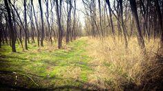 Forest in Komárom-Esztergom