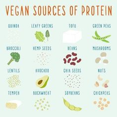 Find out where to get your protein and never run out of options!
