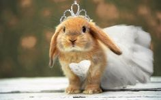 Rabbit is a very lovely and cute animal. We are giving here all interesting facts about Rabbit with beautiful photos-images. Rabbit Wallpaper, Animal Wallpaper, Wallpaper Pictures, Hd Wallpaper, Rabbit Pictures, Animal Pictures, Funny Pictures, Baby Bunnies, Cute Bunny