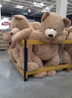 Giant teddy bears<< they look like they're in teddy bear jail Love Bear, Big Bear, Bear Tumblr, Huge Teddy Bears, Jumbo Teddy Bear, Daddy's Angel, Christmas Wishes, Plushies, Cuddling
