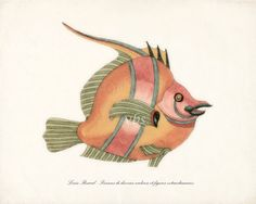 Fish of the Coral Reefs Illustration No. 3  by vintagebytheshore  $15.00 USD