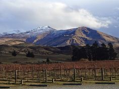 Where would you like to tour a vineyard on your next trip? Dream of sipping Pinot in New Zealand? This is a breathtaking view from Peregrine Wines in #Queenstown New Zealand