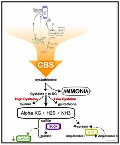 CBS Pathway and why it is important to start here.