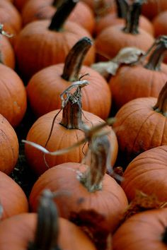 tiny pumpkins from pumpkin patch
